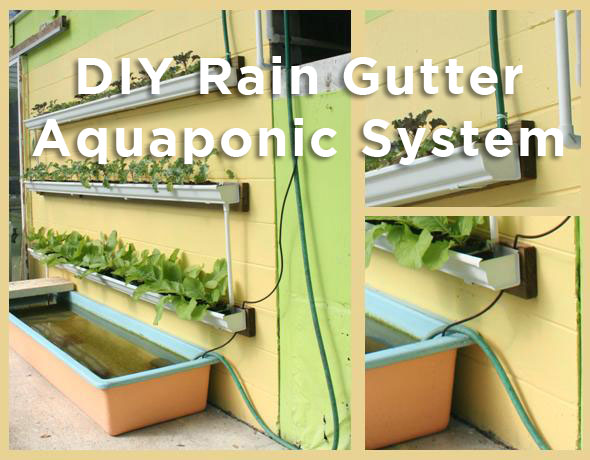 Diy Rain Gutter Aquaponic System Off Grid World