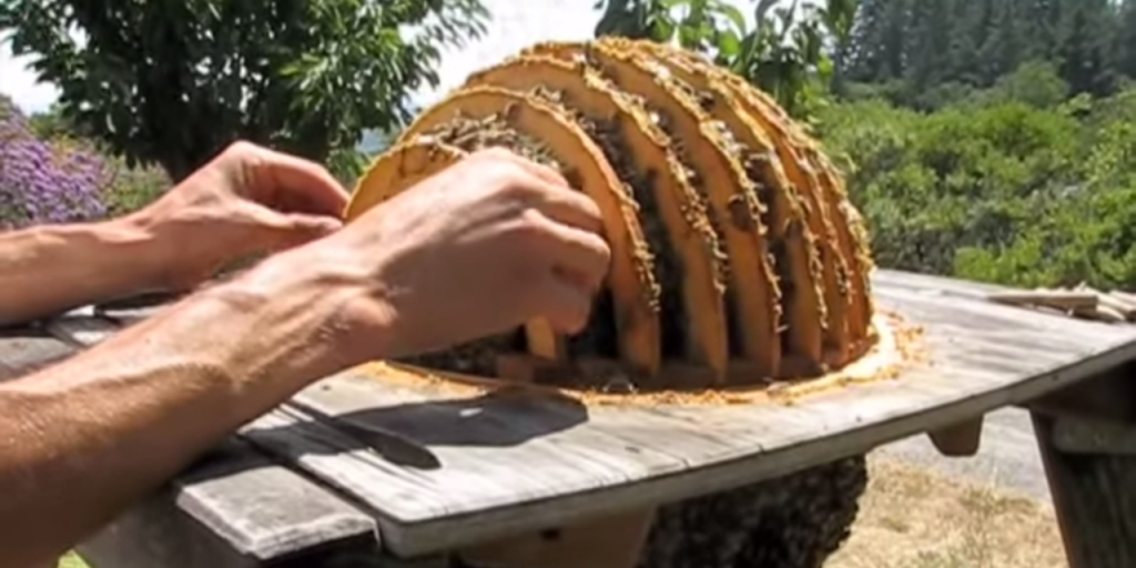 Harvesting Sun Hive