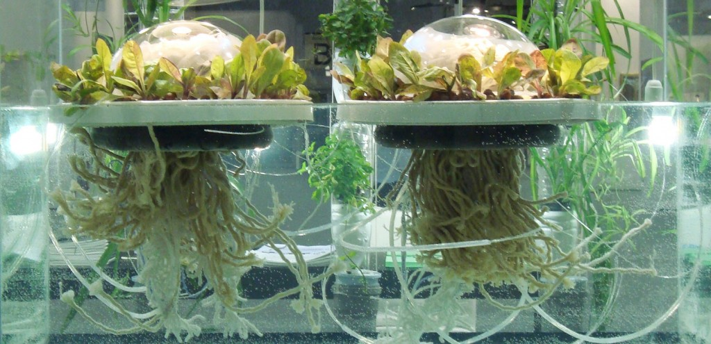 jellyfish-barge-greenhouse2