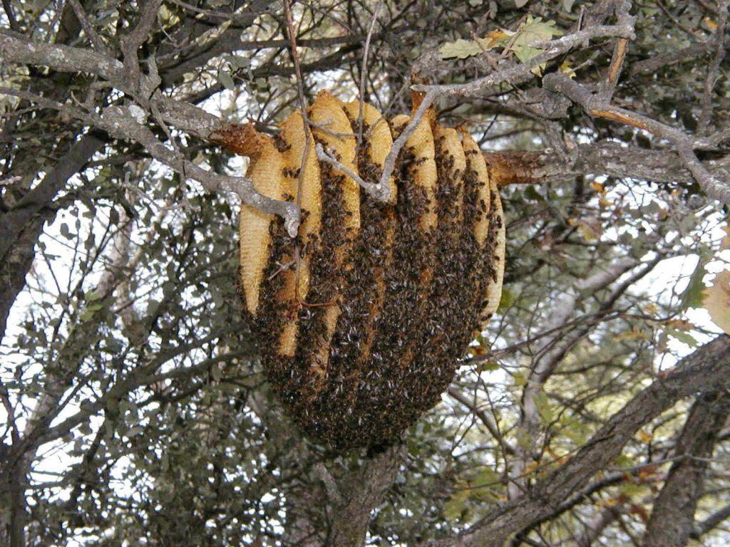 backyard beehive   Ordinary 2 Extraordinary  Natural Beehives