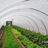 $500 Greenhouse: How To Build A Hoop House