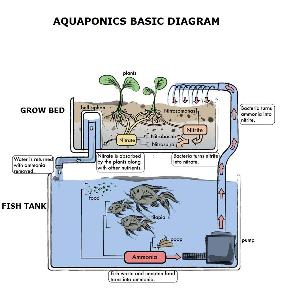 diagram of aquaponics system diagram of aquaponics