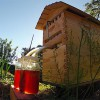 Flow Hive: Honey on Tap Directly From Your Beehive!