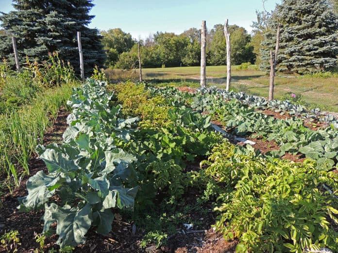 Small scale farming