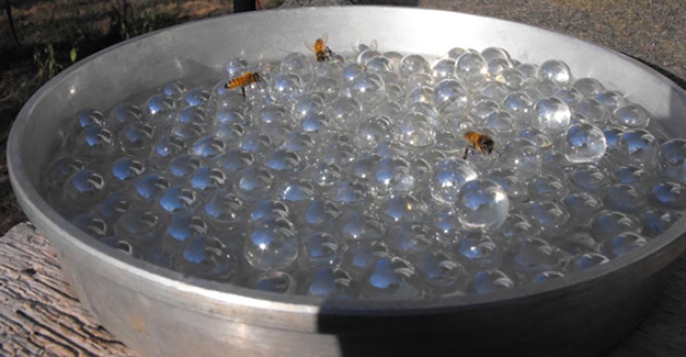 DIY bee watering station