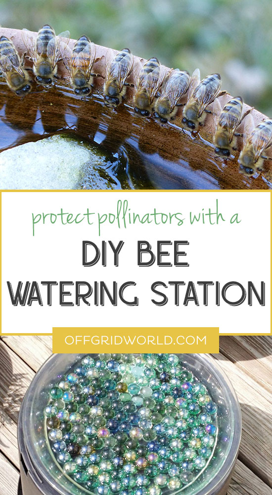 Protect Your Local Pollinators With A Diy Bee Watering