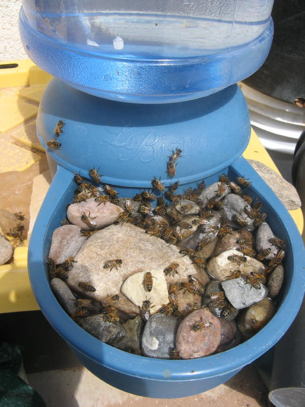 Self Filling Pet Bowl for Bees