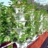 Grow 600 Plants in 36sqft Hydroponic Vertical Garden System
