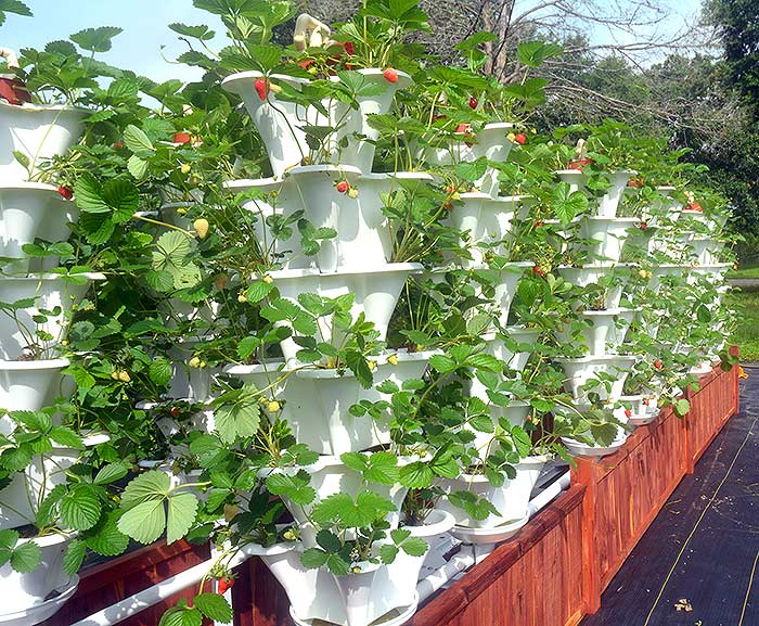 Grow 600 Plants in 36sqft Hydroponic Vertical Garden System Off