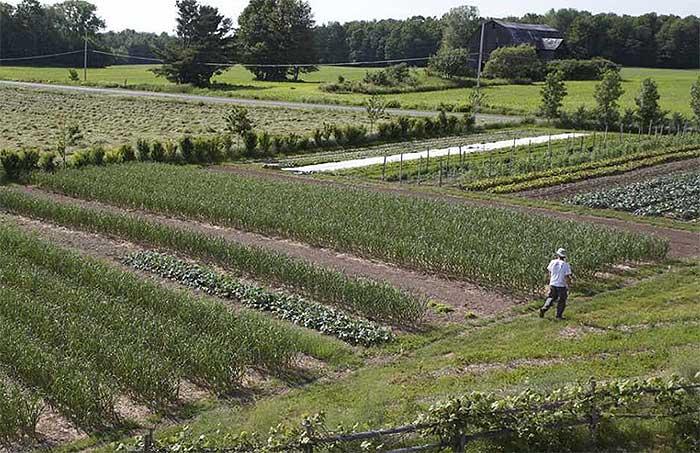 market-gardener12