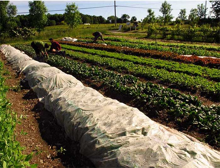 market-gardener6