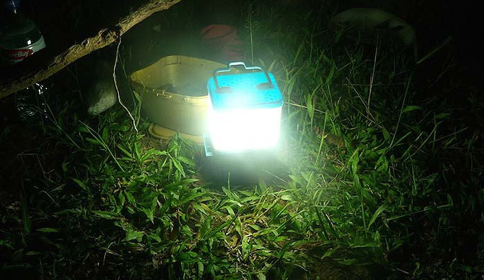 SALt Lamp 2