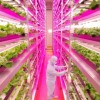 World's Largest Indoor Farm Produces 10,000 Heads of Lettuce Per Day