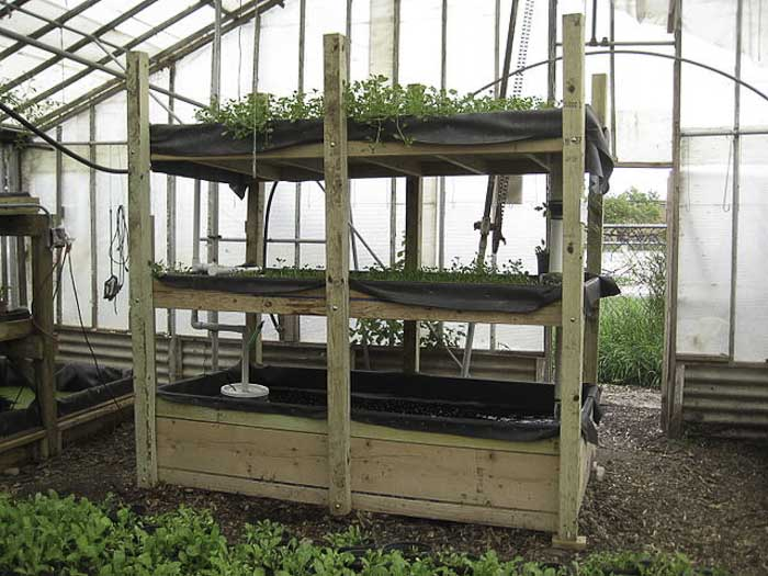Aquaponics Can Provide Vegetables and Fresh Fish in One System.