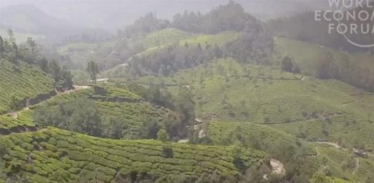 india trees