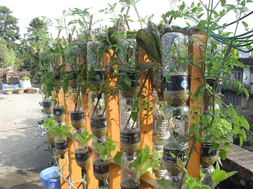 vertical aquaponic gardening