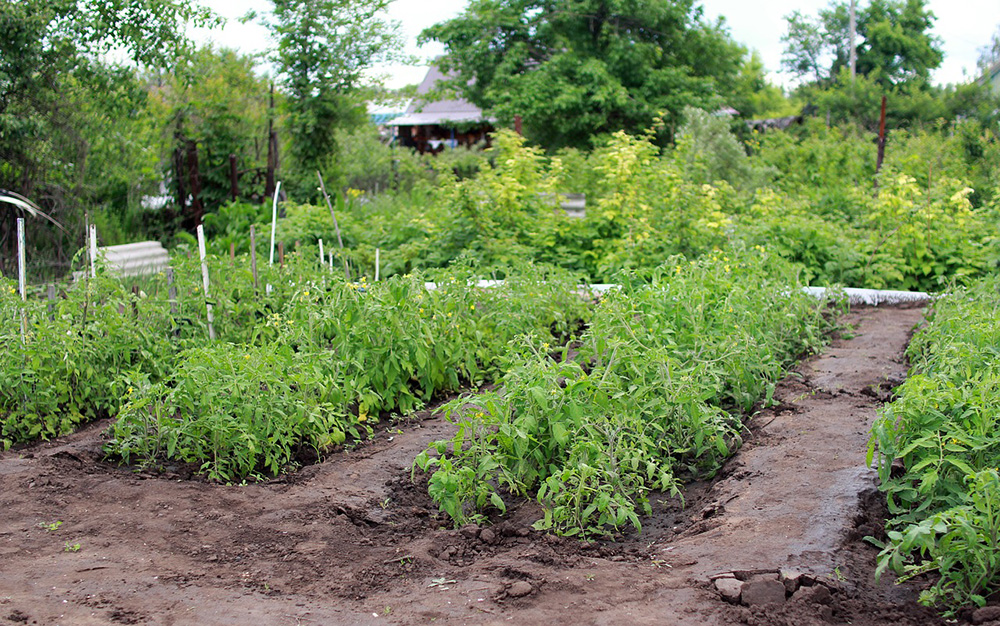 Grow a survival garden