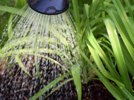 off grid greywater