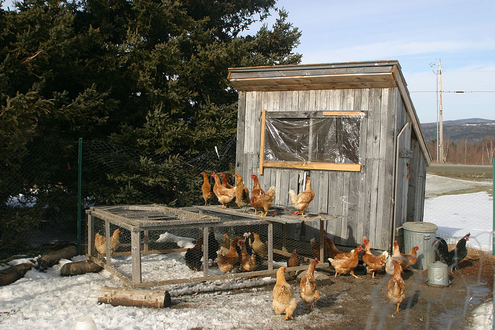 Ways to keep chickens warm