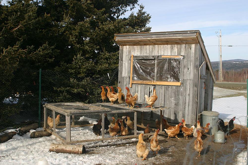 Off grid ways to keep chickens warm