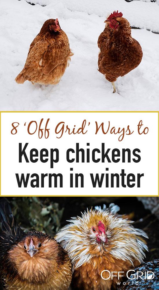 Ways to keep chickens warm