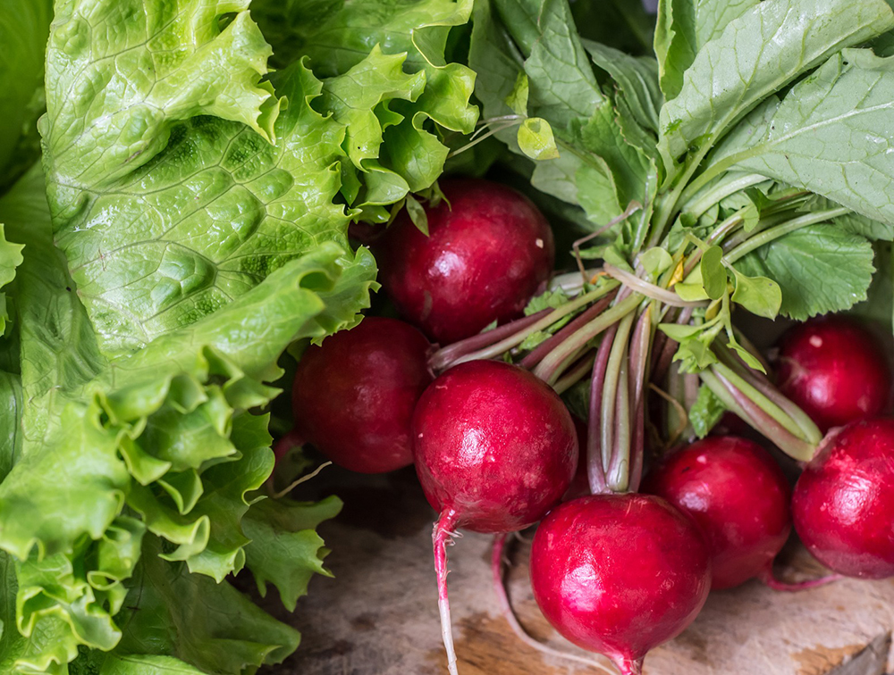 Radishes - a fast growing vegetable