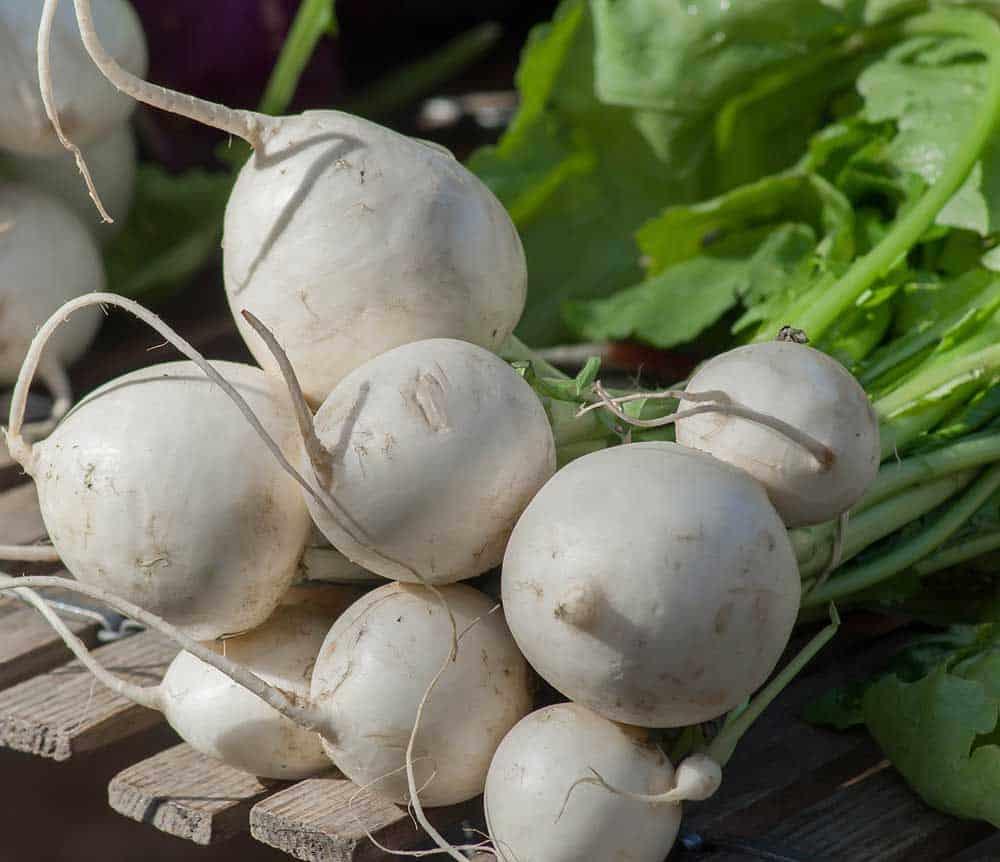 Garden turnips