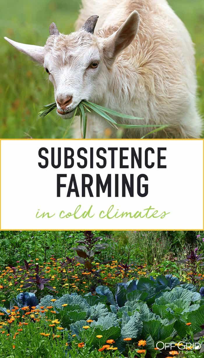 Subsistence farming