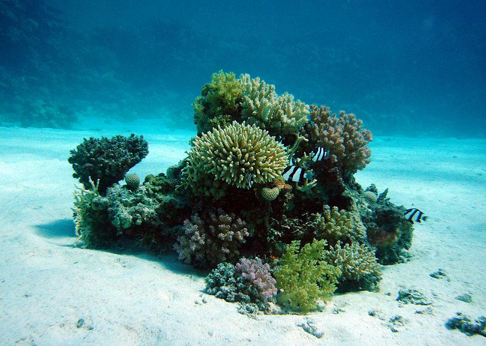 Biomimicry - coral