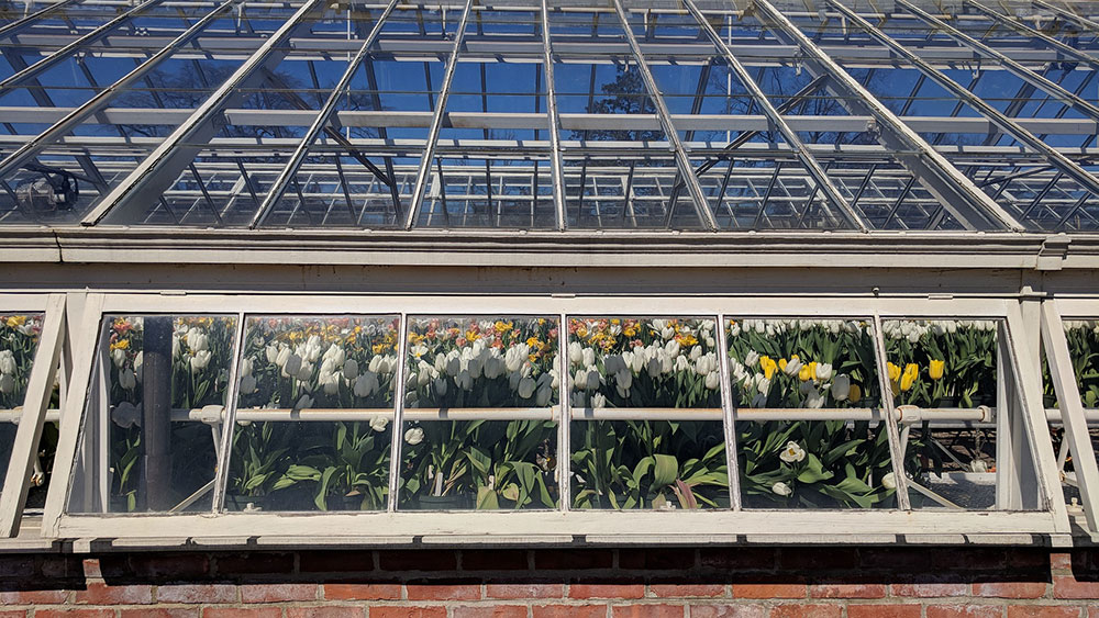Greenhouse for light deprivation growing