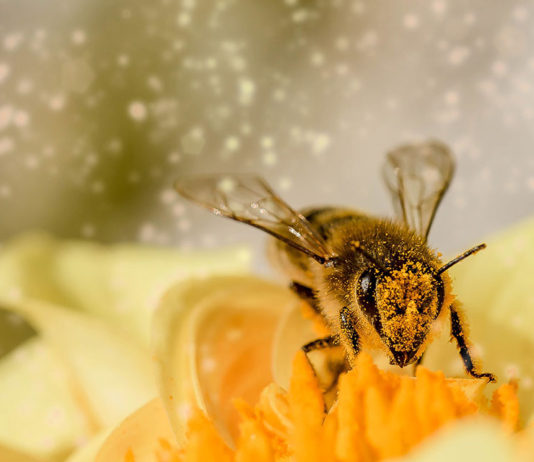 Protecting bees from pesticides