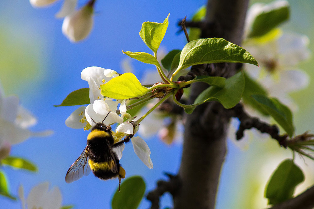 Importance of protecting bees from pesticides