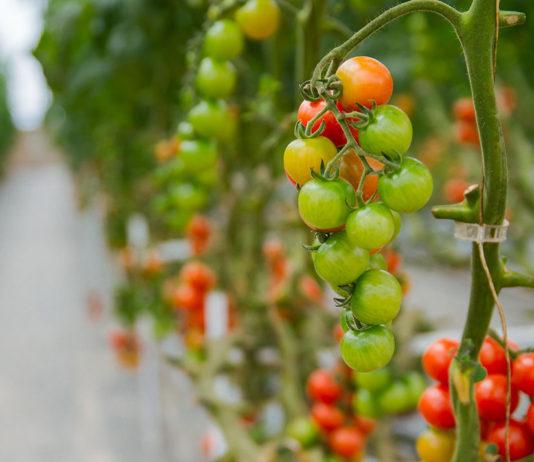 Benefits of aeroponic growing