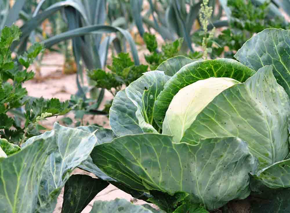 Growing zones for gardening
