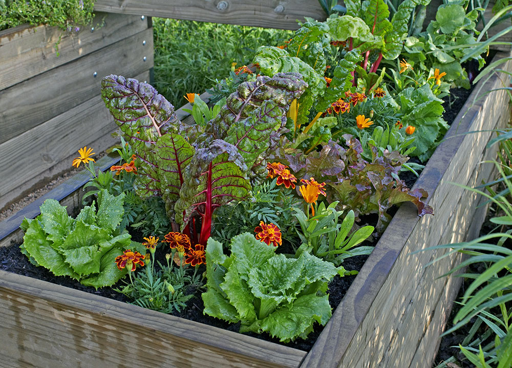 How To Grow A Superfood Garden