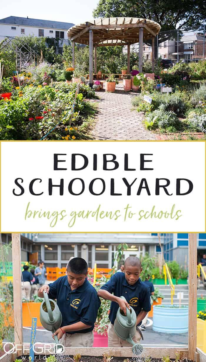 Edible schoolyard urban gardens