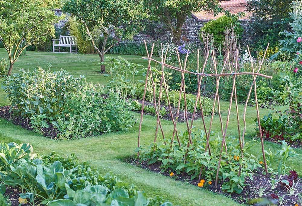 Grow a backyard garden