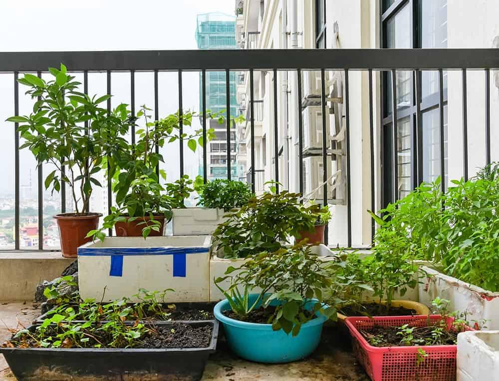 Growing food on a balcony