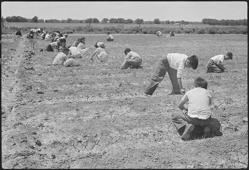Fourth graders working in their school garden