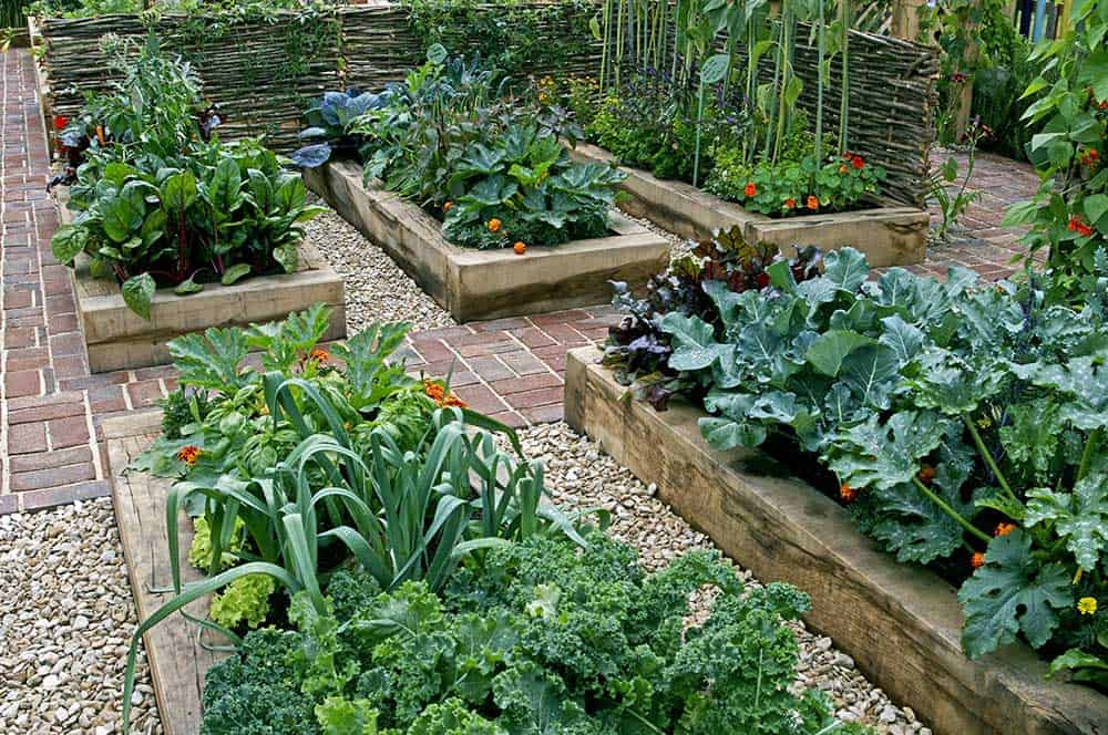 Wood raised garden beds