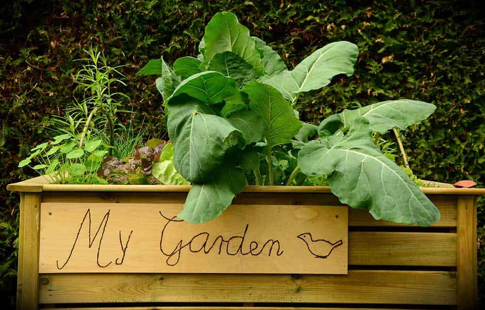 Garden bed for kids